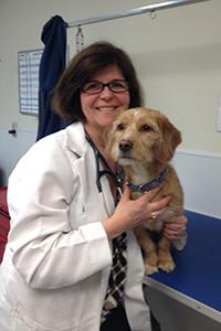 Dr. Caroline Johnston of Dumfries Animal Hospital - Dumfries Virginia