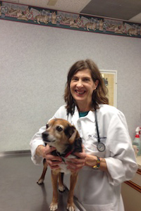 Dr. Persis Chittenden of Dumfries Animal Hospital - Dumfries Virginia