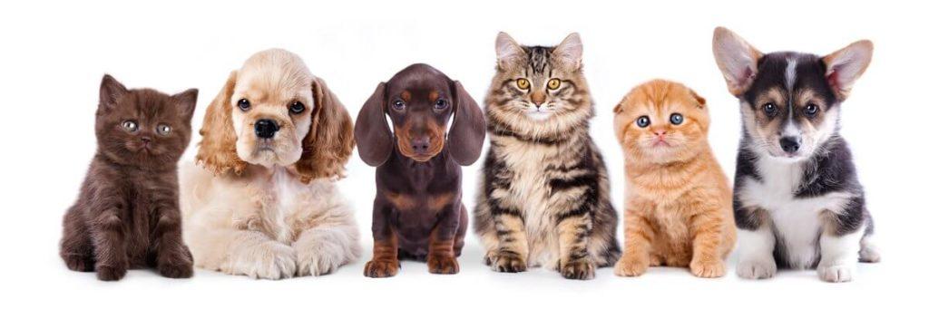 Dumfries Animal Hospital Pet Grooming Services - Dumfries Virginia